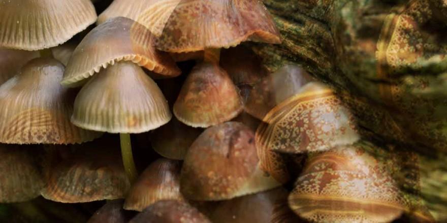Fungi for the future